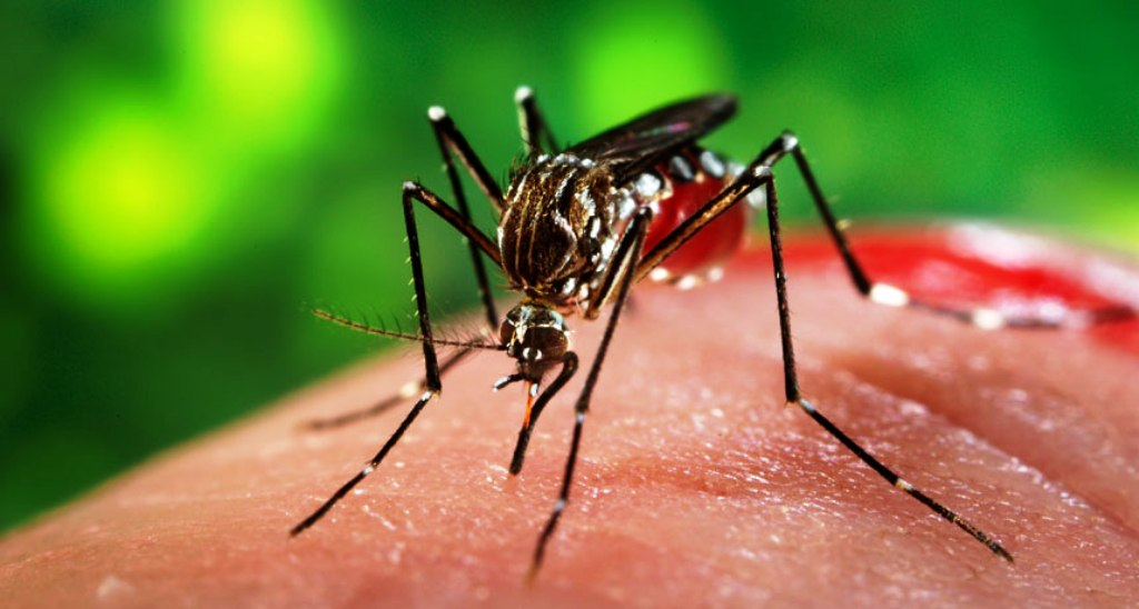 what countries have zika virus