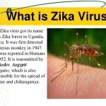 what is zika virus an introduction of zika virus
