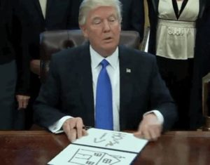 Donald Trump Funny Pictures